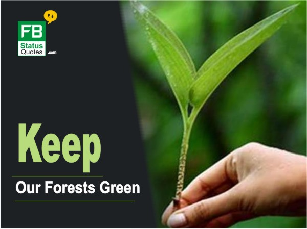Save Trees Slogans pictures