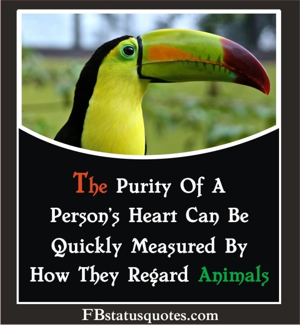 Animals Quotes For Whatsapp