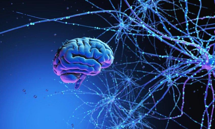 大脑的记忆