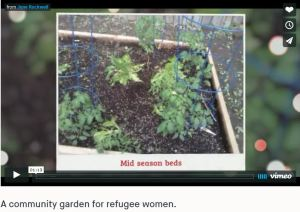 A community garden for refugee women