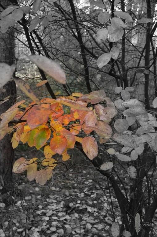 Hefstbladeren zwart-wit