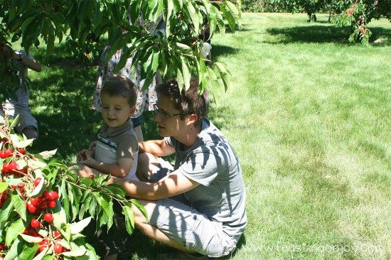 Cody and Johnny Picking Cherries