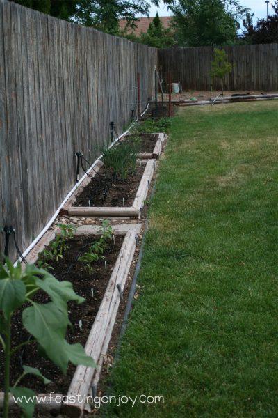 Our garden beds