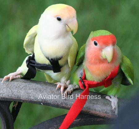 Aviator Flight Harness