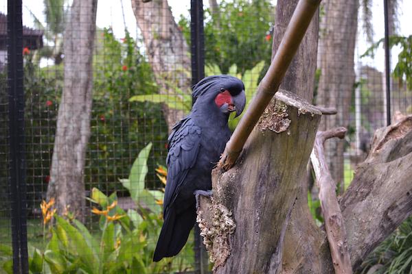 Chedi Aviary