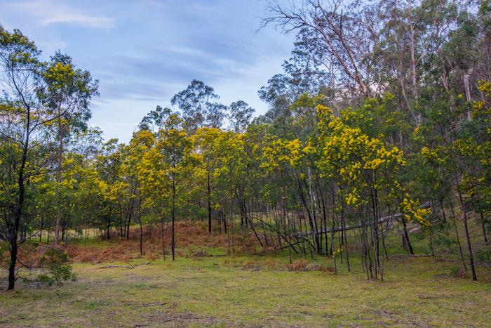 Emirates Wolgan Valley Trail Trees