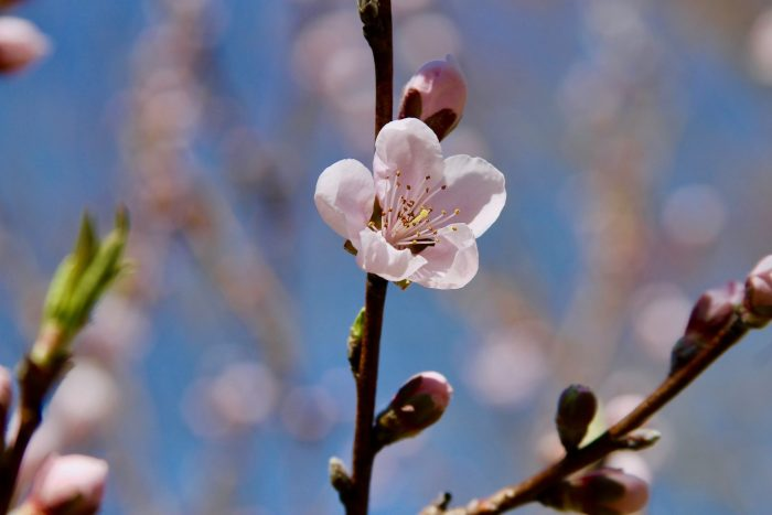 Spring Quotes, Photos & Songs to Celebrate the Season   Feather & Flint