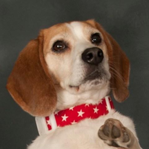 Beagle – Sydney