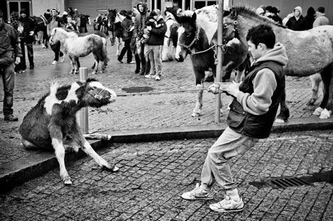 Dublin Abandoned Horses Gianpaolo La Paglia photography