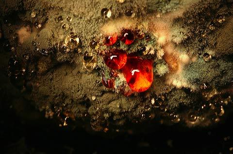 Macro photos decaying vegetables Heikki-Leis