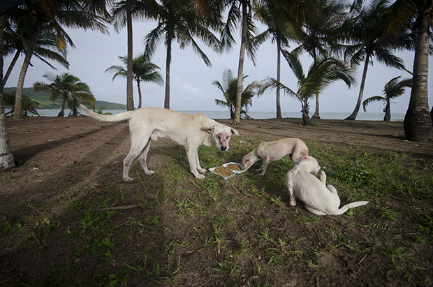 Photos Tell The Sad Story Of Stray Dogs Dumped At Dead