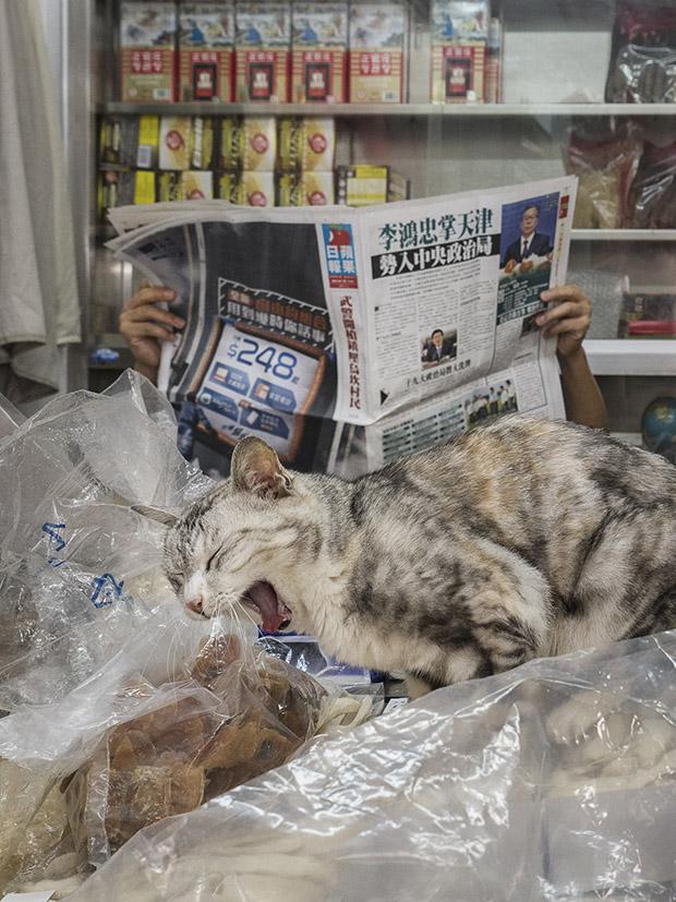 m-heijnen-hk-shop-cats-30