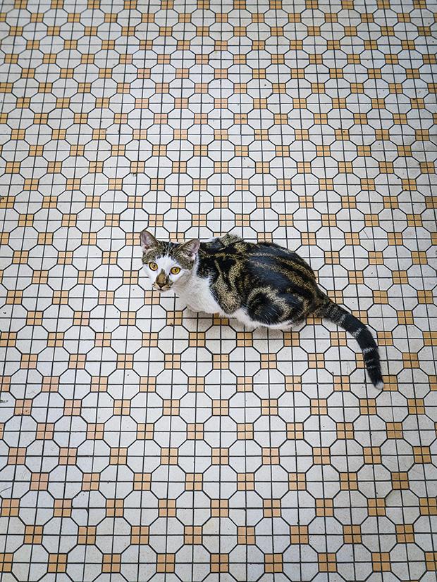 m-heijnen-hk-shop-cats-34