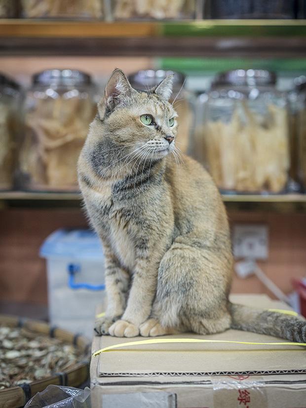 m-heijnen-hk-shop-cats-46