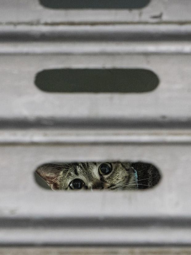 m-heijnen-hk-shop-cats-6