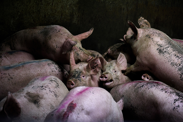 The Horrific Brutality of the Meat Industry, in Photos - Feature Shoot