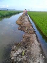 06. Cazadores de Sueca en el transcurso de la plantación de los lirios amarillos.