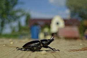 bug-1411396-m.jpg