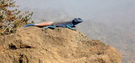Reptil en las montañas Haraz