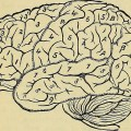 El Cerebro en el Neuromarketing