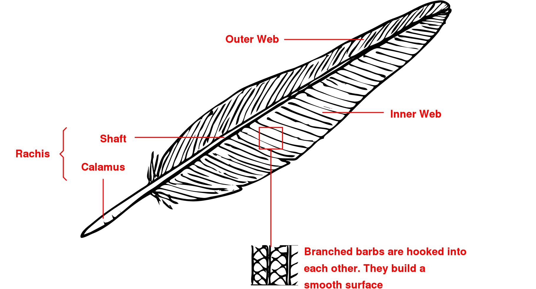 diagram parts of a feather pump identification