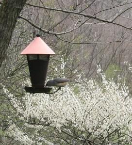 Bird feeder up close