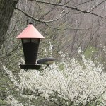 Bird feeder up close