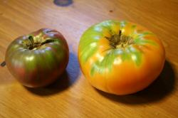 "heirloom tomatoes - the one the left is called ""Kellogg's breakfast"""