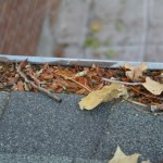 The debris in the gutters had actually started to decompose into some very nice compost