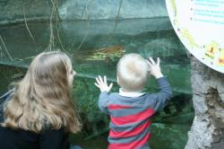 Sam and Ben checking out fish