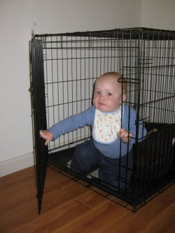Spencer climbs out of Henry's crate