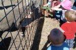 Madison feeds a goat