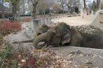 Elephants having a snack