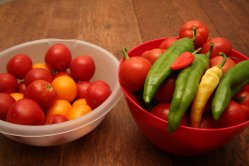 Salsa ingredients from the garden - tomatoes and hot peppers