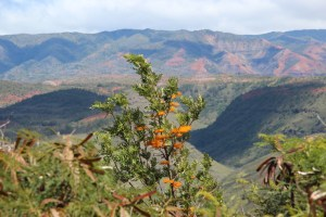 Flowers and Waimea canyon