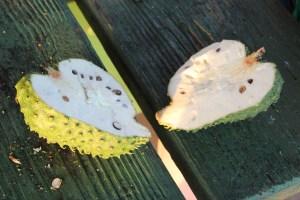 Soursap fruit cut open. It wasn't ripe yet