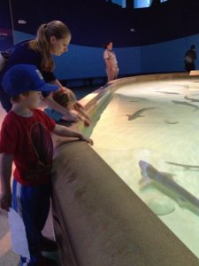 Sam and kids try to coax the sharks over