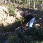 Dave cutting up the base of the tree