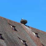 Stork on the city hall roof is lucky