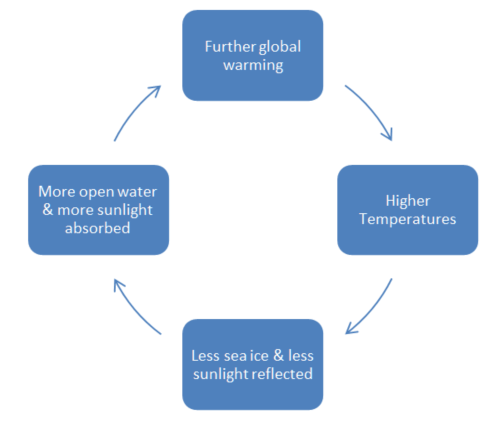 Diagram: The amplifying feedback loop formed when Arctic temperatures increase, ice melts and less sunlight is reflected
