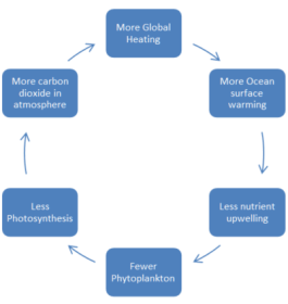 a cycle of warming reducing phytoplankton which increases warming