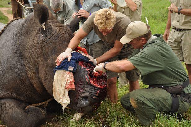 sibuya game reserve,Reserve Johannesburg,lions eat poachers