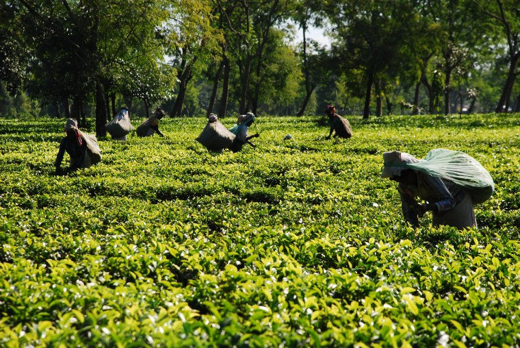tea price record ,tea ,GTAC ,assam ,Arunachal Pradesh ,state News