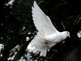 Know in detail about International Peace Day 2020