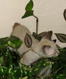 Chico in the plants