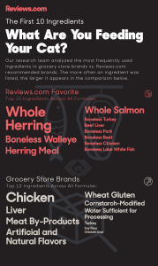 Healthy cat food infographic