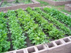 church gardens,garden,grow food,food for people,