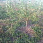 Young orchard, food for the people!