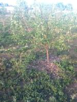 orchard,community orchard,food for families,grow food,grow fruit