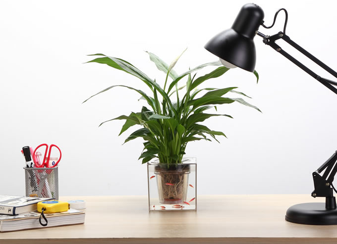 Doubledeck SelfWatering Desk Potted Plant  FeelGift